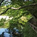 新緑垂れる一碧湖