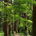 木漏れ陽注ぐ小径