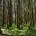 木立に注ぐ木漏れ陽