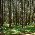 緑の絨毯に注ぐ木漏れ陽