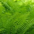 Green green ♪