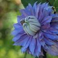 青と紫を身に纏い