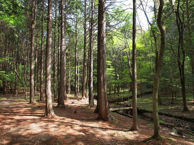 陽のあたる場所~原生の森