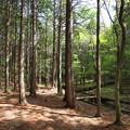 Photos: 陽のあたる場所~原生の森
