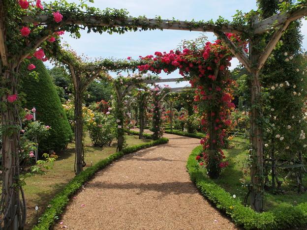 Photos: 薔薇のアーチと薄っすら青い空