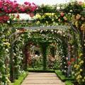 Photos: 薔薇の楽園