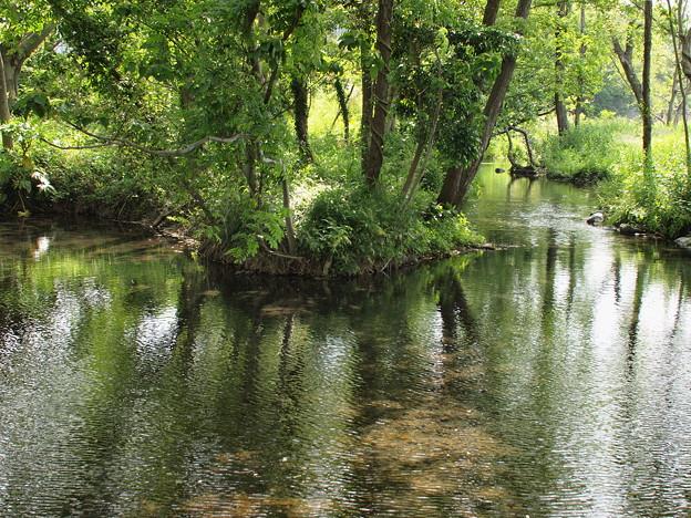 水中の木漏れ陽