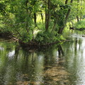 Photos: 水中の木漏れ陽