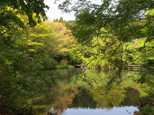 水辺を囲む緑葉