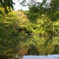 Photos: 水辺を囲む緑葉