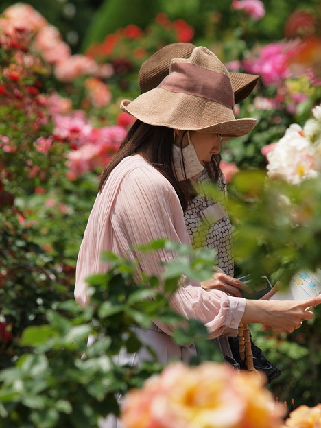 パンフ片手に薔薇を愛でる