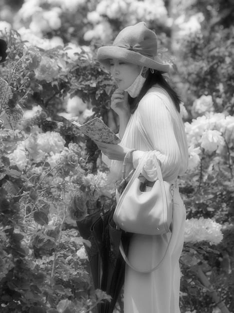 スマホより薔薇の香り