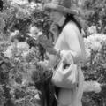 Photos: スマホより薔薇の香り