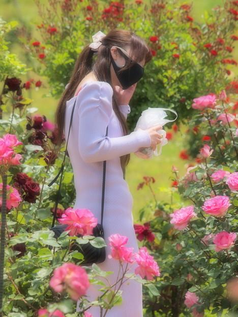春薔薇に囲まれて