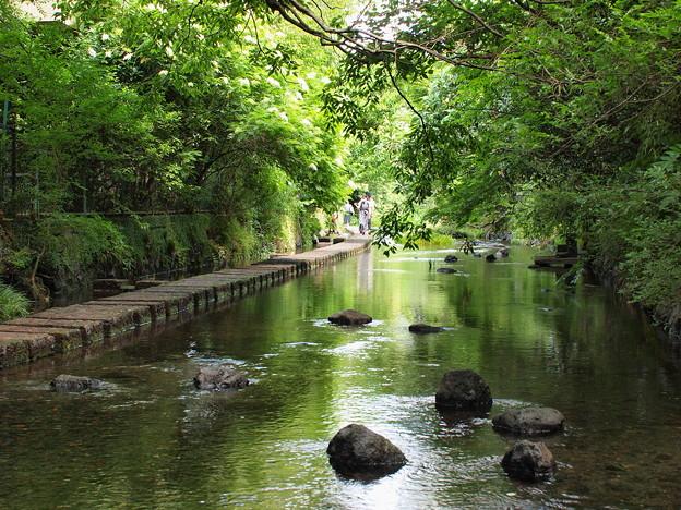 緑葉に覆われた水辺
