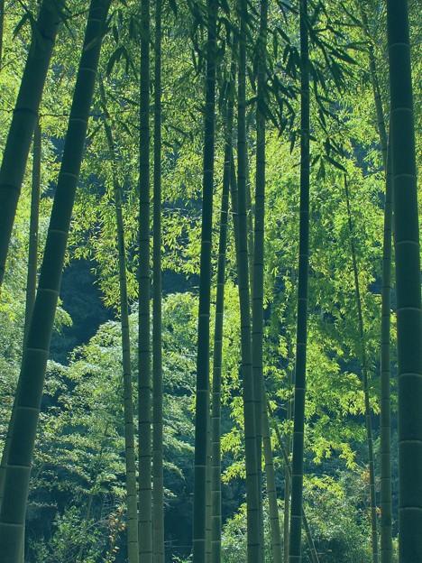ある日の竹林 -a