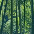 Photos: ある日の竹林 -a