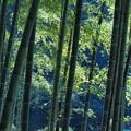 ある日の竹林 -b