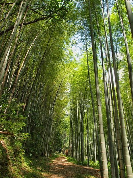 Photos: 竹林小径