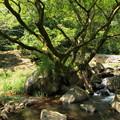 水辺の木立