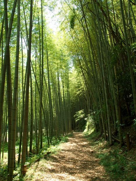 Photos: 竹林に注ぐ陽射し