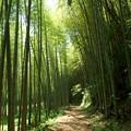 竹林に注ぐ陽射し
