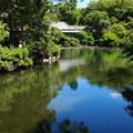 Photos: 湧水に満ちし小浜池