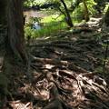 Photos: 木漏れ陽