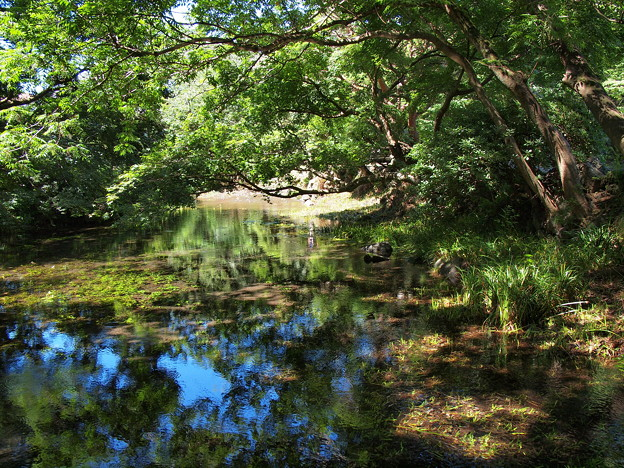 Photos: 小浜池の瀬