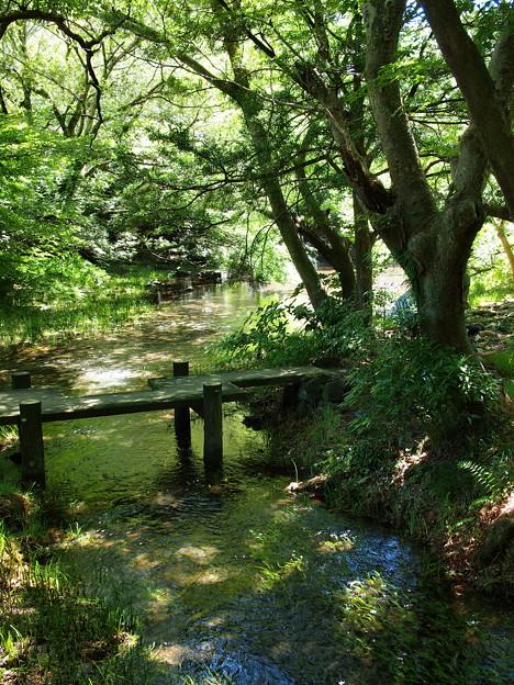 木漏れ陽がさす水辺