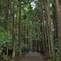 雨上がりの旧東海道
