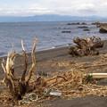 Photos: 嵐の忘れ物