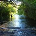 増水期の源兵衛川