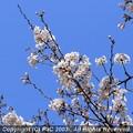 Photos: 青空ですかい