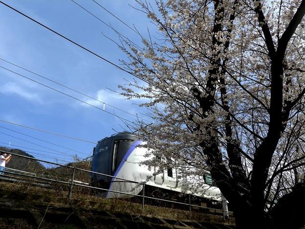 桜とE353
