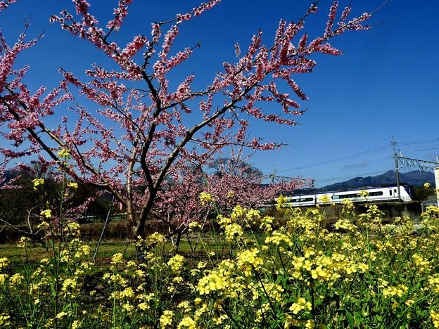 桃と菜の花とE353