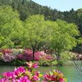 Photos: 都万、水鳥公園(3)