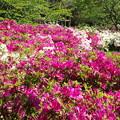 Photos: 都万、水鳥公園(5)