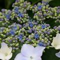 Photos: 小さく咲いてます