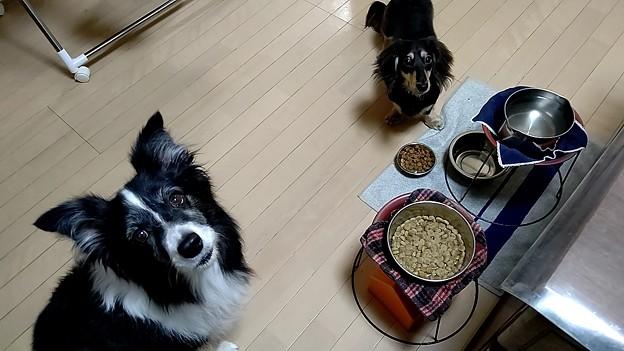 おはよーさん(04/11)しっかり朝御飯の日日曜日。サブネブエラっっフイツジエラルド…(°°)ぴ17