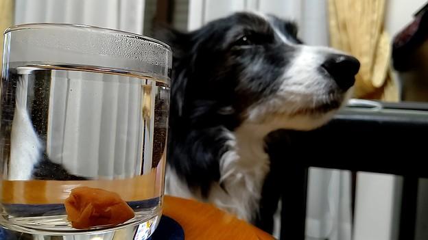 あっさり孫デイ、しゃーなし飲んどこか(°°)3