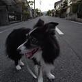 Photos: 210927一万歩二万歩散万歩~そのさん。3