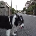 Photos: 210927一万歩二万歩散万歩~そのさん。6