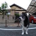 Photos: 210927一万歩二万歩散万歩~そのさん。9