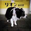 Photos: Instagram(°°)散万歩1