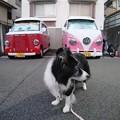 Photos: Instagram(°°)散万歩2