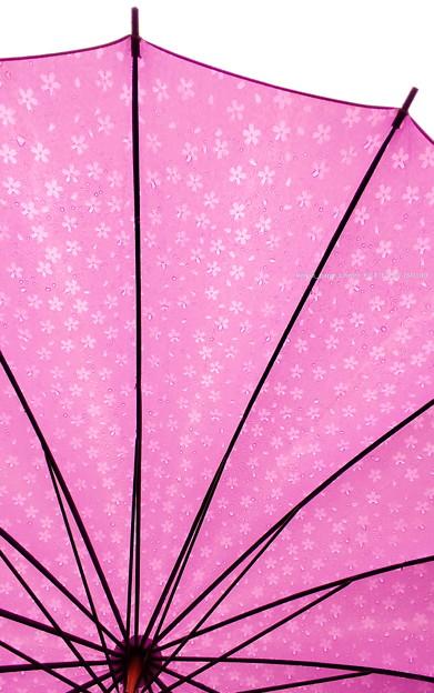 桜模様のパラソル【スマホ撮影】