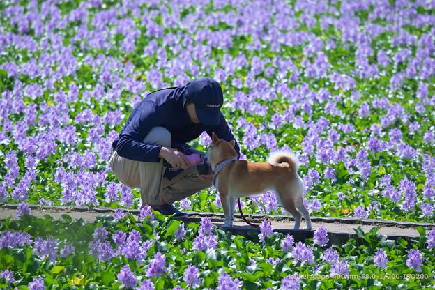 本薬師寺跡のホテイアオイと愛犬散歩