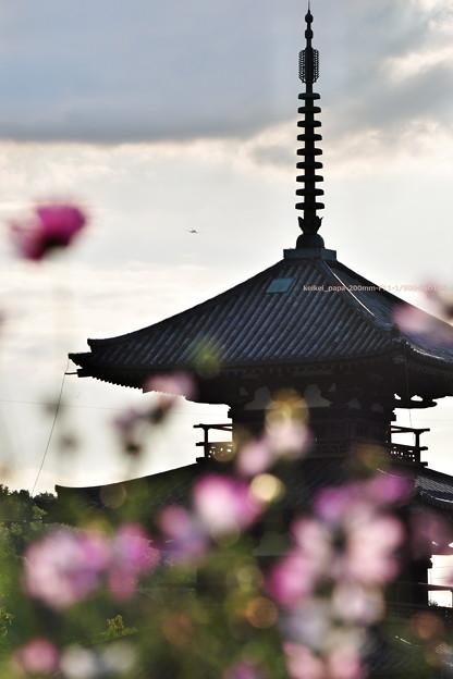 法起寺三重塔とコスモス