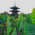 法起寺三重塔と里芋畑